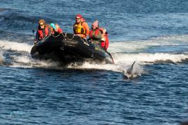 Escorte de dauphins de Peal