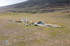 Squelette de baleine