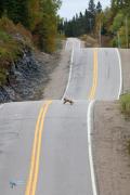 route toboggan pour renard.