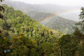 forêt du Costa-Rica