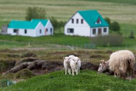 Bakkagerdi. Est Islande.